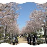 『花見散歩とめかぶ』の画像