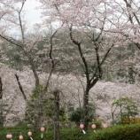 『春&おっちょこちょい(^_^)』の画像