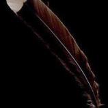 『世界一高価な一枚の羽』の画像