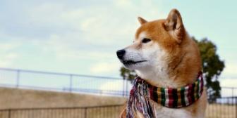 【神経がわからん】ワンちゃんの飼い主が長期入院することになった。→あれこれ条件つきで新しい飼い主の募集をしていて…