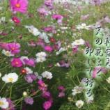 『天の園』の画像