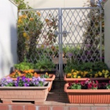 『12月の庭の花;東大和市』の画像