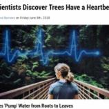 『樹木の脈拍』の画像