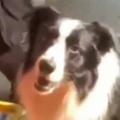 【イヌ】 散歩の途中でパパが子供を抱っこした。あっ!ボクもボクもぉ! → 犬はこうなる…