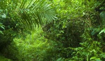アフリカの熱帯雨林でピグミー族と一緒に自給自足生活することになったバカだけど