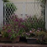 『9月末の庭の花;東大和市』の画像