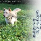 『迷犬ロッキー』の画像