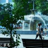 『大通公園』の画像