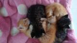 ニートが子猫五匹拾ってから一ヶ月経った(※画像あり)