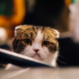 『自分は一体何に怒っているんだろう?というとき』の画像