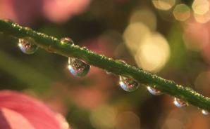 キラキラの雨露をまとった花々