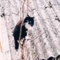 ネコが屋根の上にいた。目の前には木がある → 器用な猫はこうやって帰宅します…