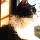 『愛猫ソラ肝リピドーシス闘病3ヶ月間の経過と治療費』の画像