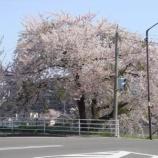 『わが家の桜10 15』の画像