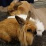 ウサギも人間も仲良し