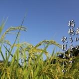 『収穫まじか』の画像