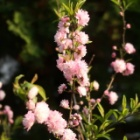 『【ピノ子日記】指を切ったので庭作業はお休み&春の庭』の画像