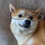 『【形直影端】メガネが個性的なポメ柴ふうちゃん』の画像