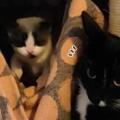 子ネコたちが寝床から出てきた。ここから離れちゃダメよ → 母猫はこうします…