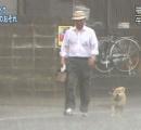 【台風19号】「すべての犬を家の中へしまえ」台風に備えて家の中にしまわれる犬たち(たまに猫)