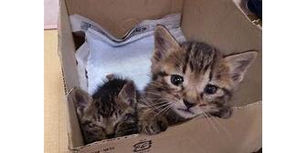 昔、まだ産まれたての子猫を拾った。皆で必死に飼ってくれる人探したけど、あれも無責任な行動だったのかな