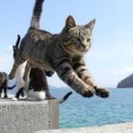 猫の寿命が10から15年ってのは納得できない