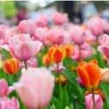 『【立川・西立川】まるで絵本の中みたい!国営昭和記念公園のチューリップが見頃』の画像
