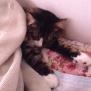 寝ているニャンコを触ってみたら・・・か、かわいい!