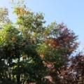 収穫の秋【秋田の地酒 高良酒屋】