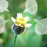 『植物はテレパシーと信号を使ってコミュニケーションをする!』の画像