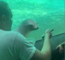 水族館でアシカにスマホを見せてみたところ すげー興味津々で話題に