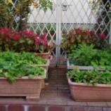 『11月の庭の花;東大和市』の画像