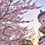 『<2018年>ディズニーランドでは桜が舞っています(*´ч`*)』の画像