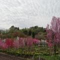 天神山ガーデン 散策