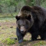行方不明の男児を森で発見「クマが一緒にいてくれた」
