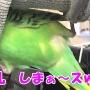 ぴぴちゃん(長男♂3歳)のシードの殻を水に着けて拾って 殻をシガシガ~🎵ww るるちゃんの想い出~😍