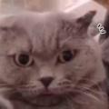 ネコと一緒に「自撮り」してみた。人の顔が猫になる。・・・え? → 猫たちはこうなります…