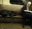 【画像】ロシアの犬、地下鉄を使いこなす