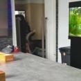 「わんわんお!」来客が訪れるちょっと前から教えてくれるハスキー犬(動画)
