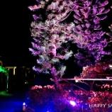 『宮古島旅行2017春:シギラベイサイドスイートアラマンダの夜』の画像