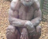 【画像】このチンパンジーと素手で戦って殺すことに成功したら1千万wwwwwwwwwww