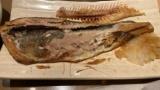 【悲報】やよい軒ほっけ定食の食べ方が汚いと同僚に指摘されたんだがwww(※画像あり)