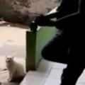 ネコの前でギターを弾いてみた。猫語で「にゃうにゃう」歌ってみる → 猫はこうなる…
