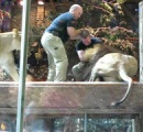 チリの動物園でライオン飼育場に自殺目的の男が侵入!2頭殺処分,男は病院搬送へwへ