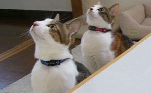 猫たちが見上げる先にあるものは