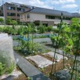 『【川崎】シェア畑活動』の画像