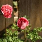 プチ* フルール ACTIS FLOWER&GARDEN GREEN