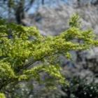 『KAMLAN50mmF1.1による春の風景① 2020/05/07』の画像