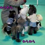 『ドッグランにかわいいワンちゃん大集合!アジリティも見事に制覇!』の画像
