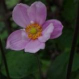 『9月の花と都立薬用植物園』の画像
